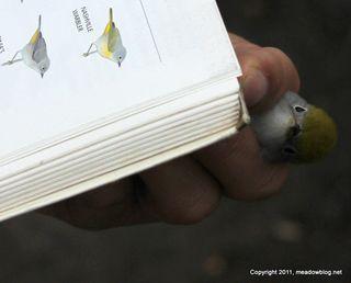 NJMC bird in hand_8551-2