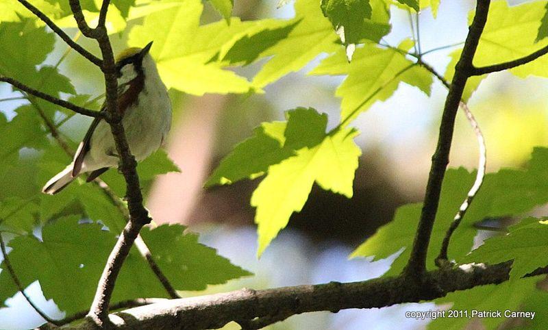 AudubonTripRidgefield