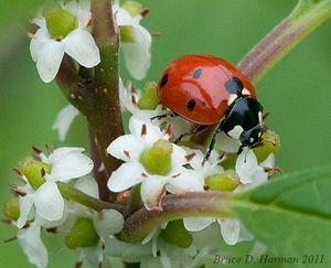 Lady-bug-001