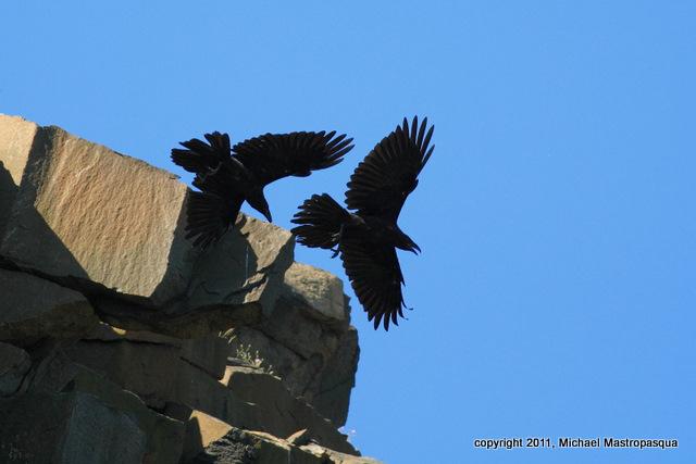 Ravens 2-1