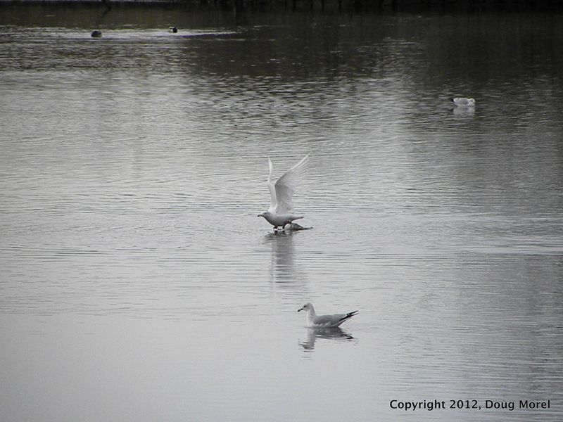 2012 Birds 004