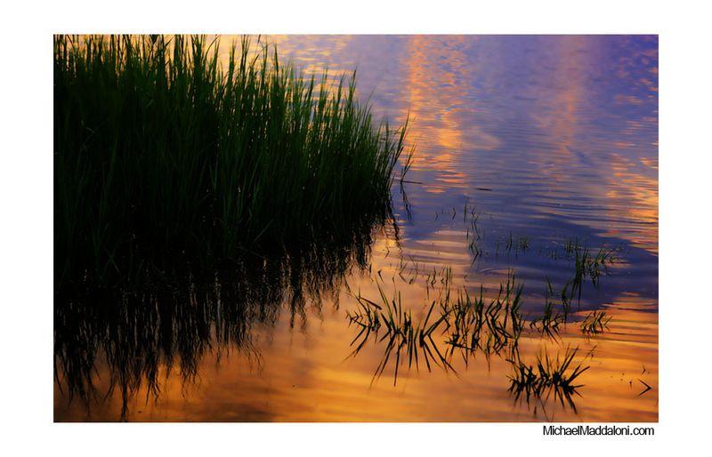 Meadowlands_reeds