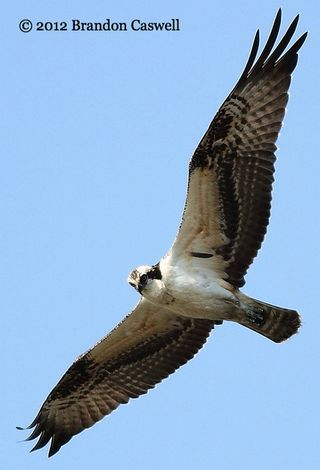 2-Osprey flight