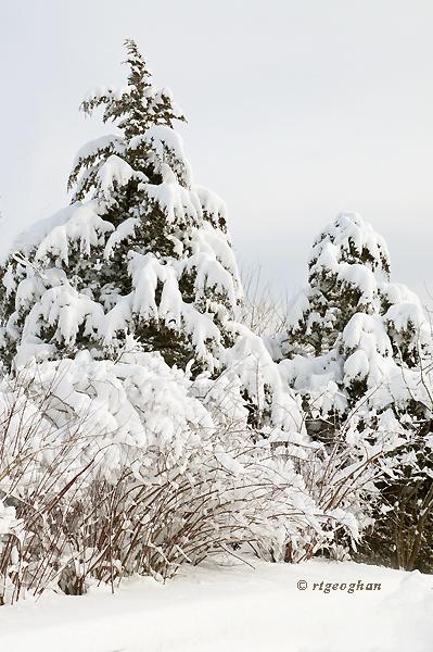 Feb 9_Snowfall DeKorte ParkSM_4766_RTGeoghan