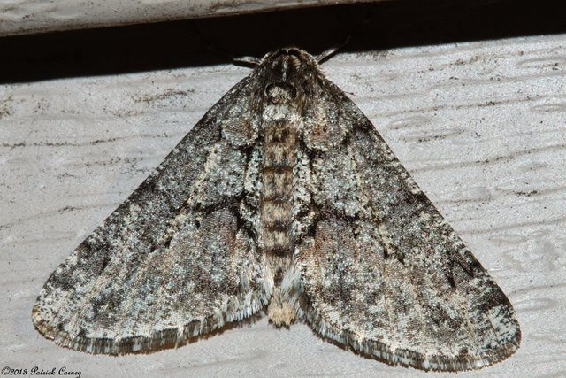 First Moth of 2013 016