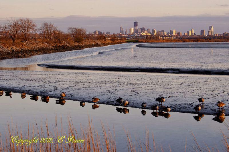V NYC 004bEB Mudflats Twilite RchrdDKorte Park Mdwlnds NJ  010812 OK BLOG