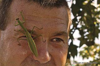 1-mantis
