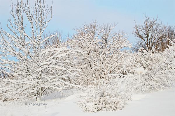 Feb 9_Snowfall DeKorte Park NJ SM_RTGeoghan_4715