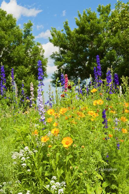 June 15_DeKorte WildflowersSM_Regina Geoghan_2081