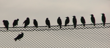 Birds_on_wire