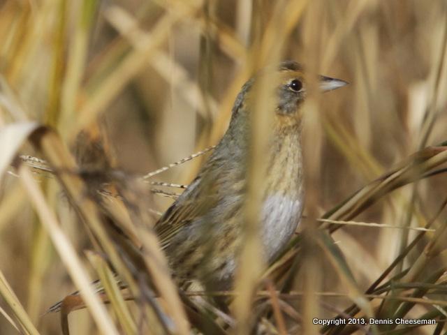 1-sparrow 2