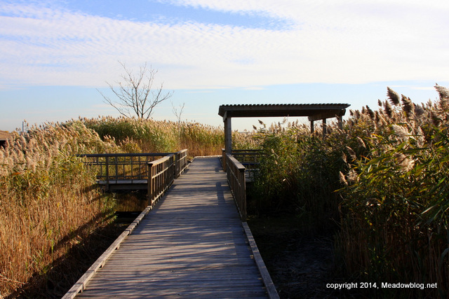 Marsh Discovery Trail