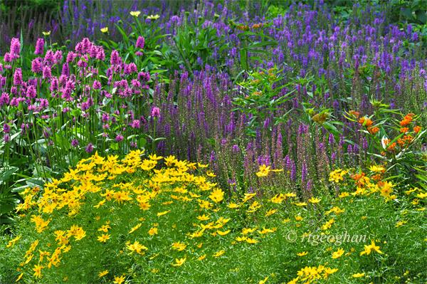 June 23_DeKortePark-FlowerGardenSM_ReginaGeoghan_9418