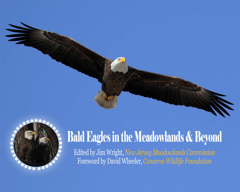 Bald Eagle Cover