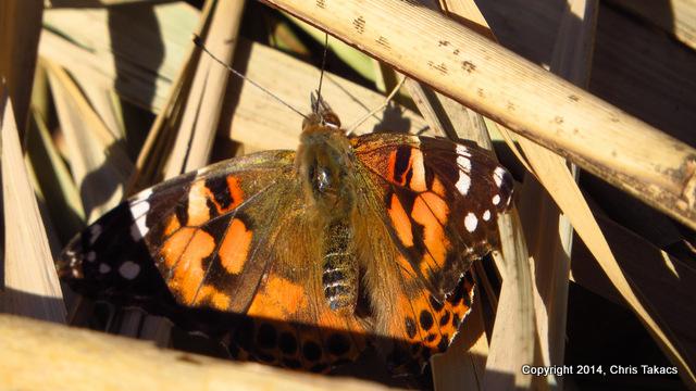 1-29 degree butterfly