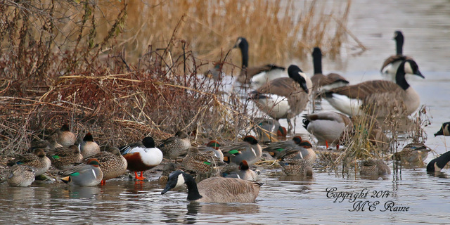 1-112914 FTD B Waterfowl Landscape 001f MCM Mdwlnds NJ