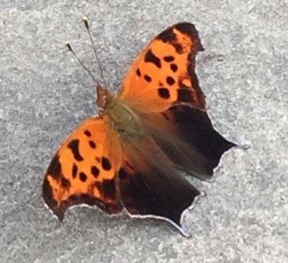 moth cropped