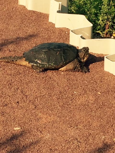 Turtle monday