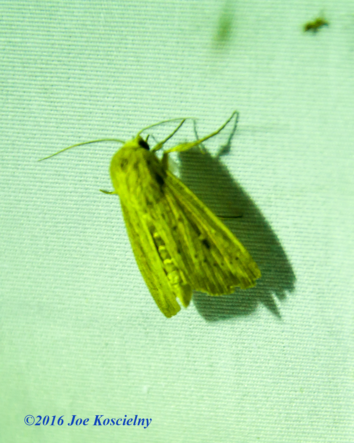 DeKorte Moth Night-4
