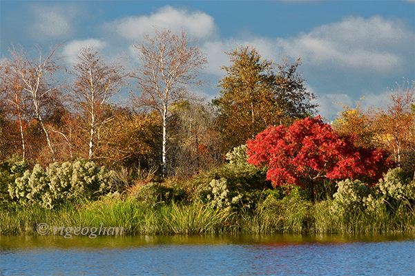 oct-21_mill-creek-marshsm_regina-geoghan_8329