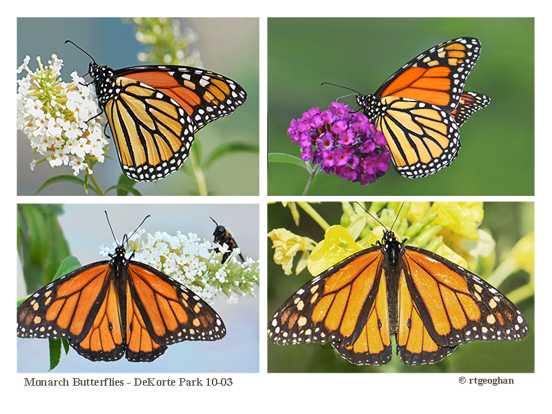 october-3_monarch-montage-dekorte-parksm_regina-geoghan-1