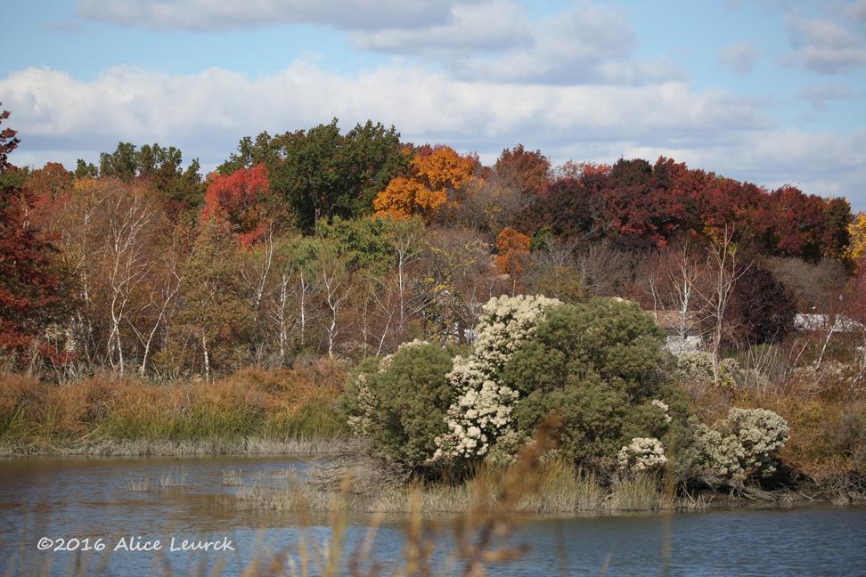 fall-foliage-mcm-11-6-16