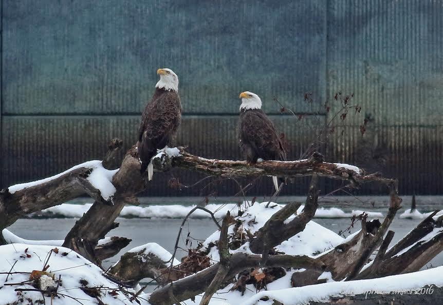 eagles-passaic-river